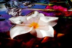 Petals - Rejuvenation