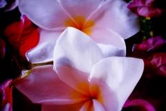 Petals - Cufflinks