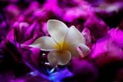Petals - Blue Velvet Swirl