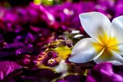 Petals - Golden Beads