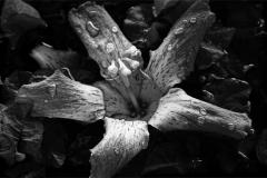 Petals -  Droplets