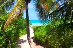 Paradise Path - 2013