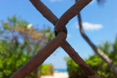 Paradise Trapped - Old Beach Fence