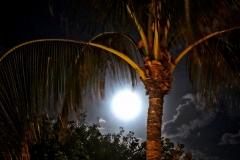 Night Light in Paradise