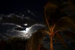 Whispy Palms